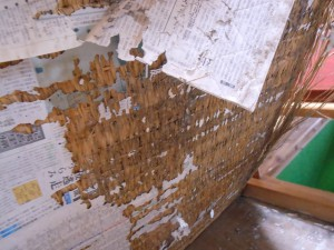 白蟻にヤラレタ畳