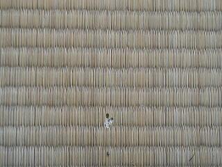 畳にあいた白蟻の穴